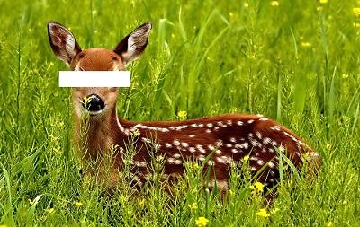Name:  no eye deer.jpg Views: 219 Size:  71.2 KB