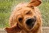 Name:  Wet dog shake.jpg Views: 113 Size:  24.2 KB